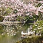 JAPAN spring 2015